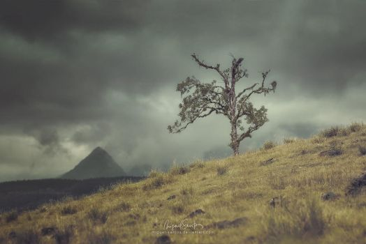 Monolithic Tree by Miguel-Santos