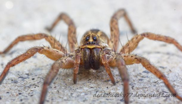 Spiders defend the same space I'm living in by DeadOhioSky77