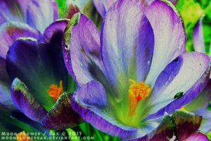Garden1 - Buggy Crocus by MoonFlowerSax