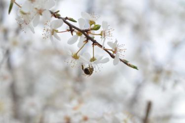 A Sign Of Spring by Fiograph