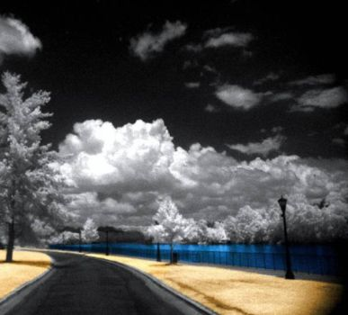 infrared photography  11 by Shim7