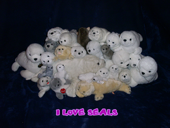 I Love Seals by DFVela
