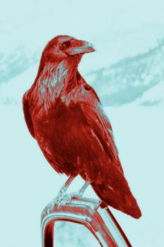 Red Raven by gypster