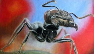 Hyperrealist drawing - Ant by Edestoid