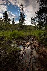 A trip in Norwegian forest Bymarka by Fishermang