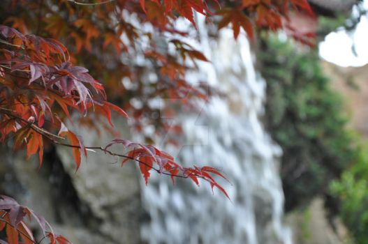 maple tree and waterfall by instant-moka