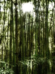 Surreal Bamboo Forest by alimuse