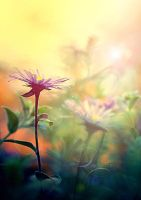 Sunkissed Nature by Lady-Tori