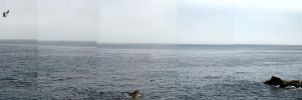 Monterey Bay from the Aquarium by dhunley