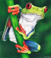 Red-eyed tree frog drawing by Kot-Filemon