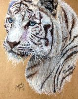 White Tiger by KristynJanelle