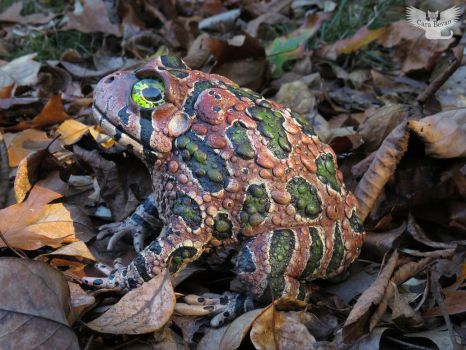 Karoo Toad by ART-fromthe-HEART