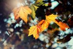 its Autums, baby by SL-Picture