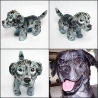 Charlie the Catahoula Pupple by LeiliaClay