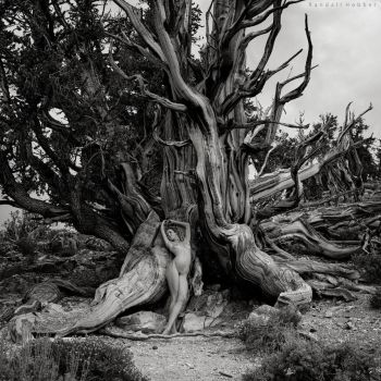 Rooted by rdhobbet