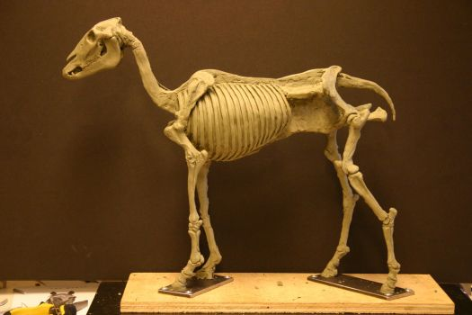 Horse Ecorche - Day 6 by aerie-
