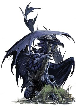 Young Black Dragon by BenWootten