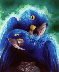 Hyacinth macaws by Sonificent