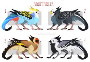 Birds adopts [one day AUCTION] Closed by NoahAsai