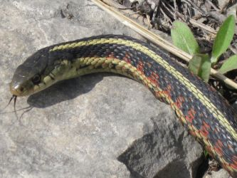 Snake by the Lake by supercilious-zahhy