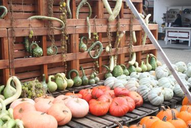 view to awesome pumpkins 3 by ingeline-art