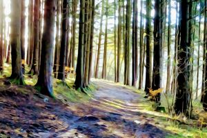 watercolor forest by Mittelfranke