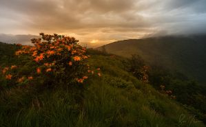 Flame Azalea Sunrise by rctfan2