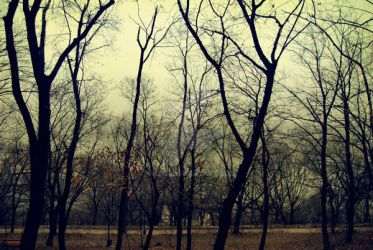 Trees. Winter. 2 by asensi