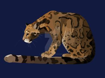 Clouded leopard by wolf-sketcher21