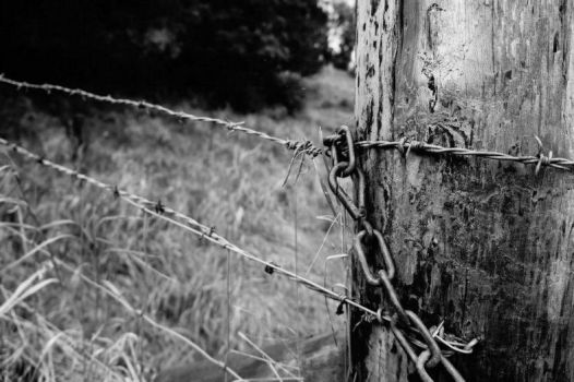 Barbed wire by Scammellarr