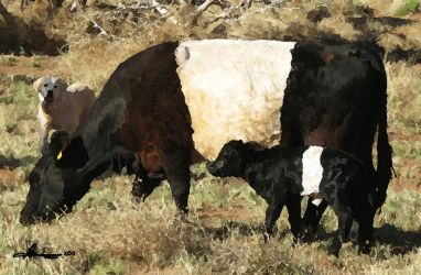 Bertie and her 2012 bull calf #2 by xxchef