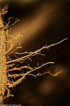 Roots 2 by MohamedAlmansory
