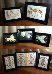 Framed Miscellany by muffin-wrangler