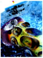 .:Seashell:.:Inverted: by anarchycat