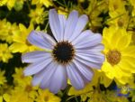 Blue On Yellow by ryanshave