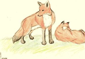 Fox Drawing by Seliex