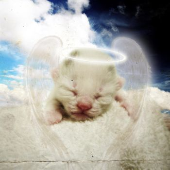 Innocence of Angel by excence