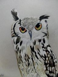 Owl Really. by Ninetynineprobs