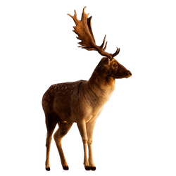 Deer PNG Stock 3 (3-3) by Gilgamesh-Art