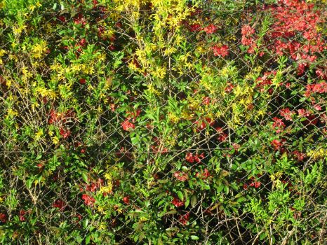 red+yellow+green hedge by tilianus