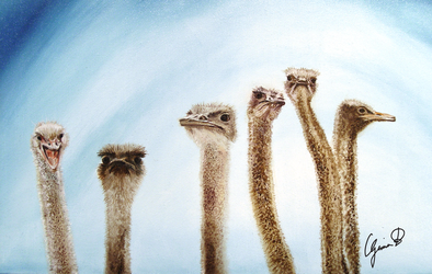 Ostriches by sgarciaburgos