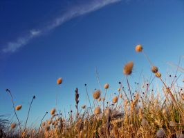 Plants Swaying in the Breeze by TaGiRoCkS