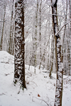 Winter Forest Stock 19 by AreteStock