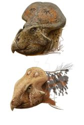 Protoceratops and Archaeoceratops by Lucas-Attwell