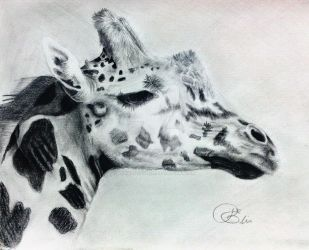 Giraffe by Desiree-Estelle
