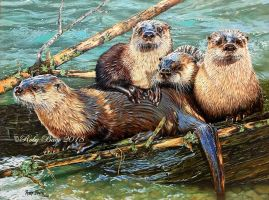 SACRAMENTO RIVER OTTERS by robybaer