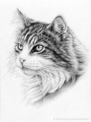 Katzenschoenheit - Cat Beauty by ArtsandDogs