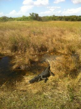 Chillin' in the Everglades by Sphenacodon