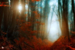 may the light be with you... by ildiko-neer