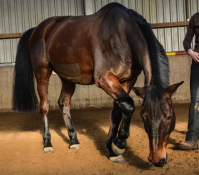 Free Dressage- Pawing Ground by LuDa-Stock